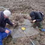 Volunteers fishing in rock pools