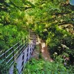 Hawthorn dene path