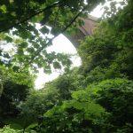 Foliage at Hawthorn viaduct