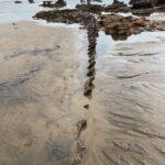 Blackhall Rocks Wreck