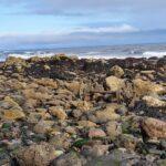 Chemical Beach, Dawdon